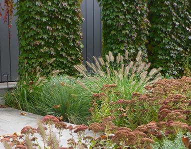 Elwood Drought Tolerant Garden; Elwood Drought Tolerant Garden ...